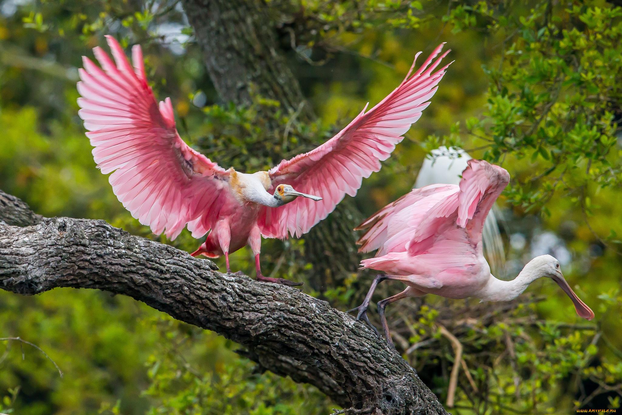 посмотреть фото животных и птиц один